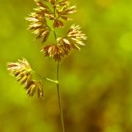 Wild wild Weeds