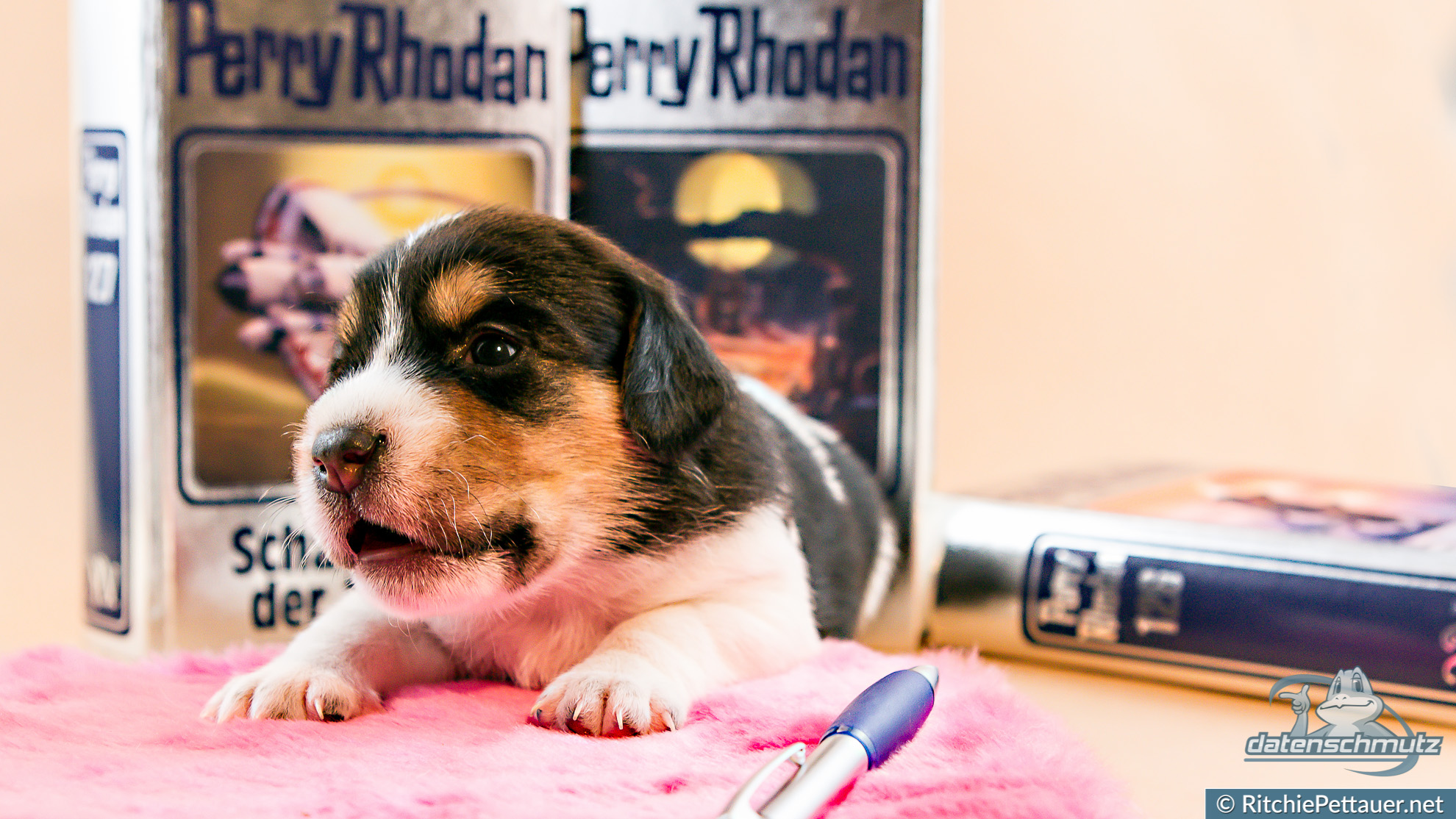 Puppies And Their Dream Jobs Dog Family Portraits Ritchie