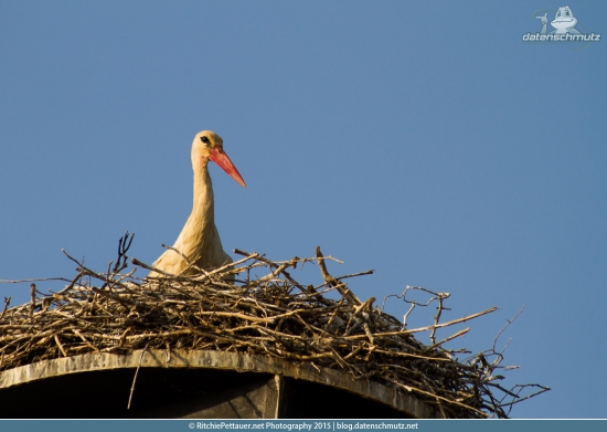 Mr. oder Mrs. Stork