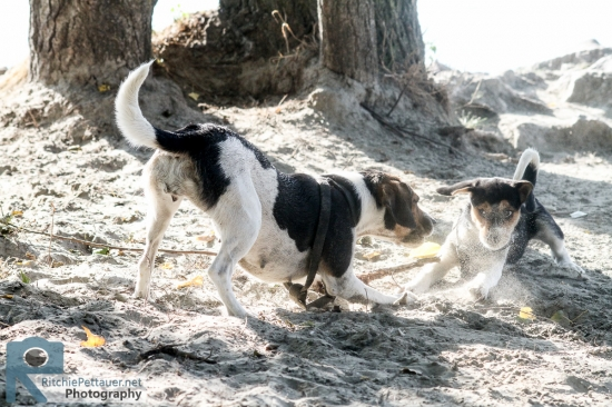 Capri and Pula - A day at the beach