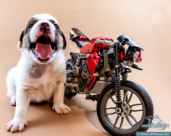 I'm all about male values - that is why I will win the dog moto